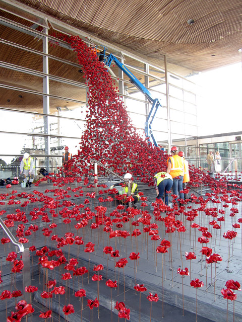 Positioning the poppies