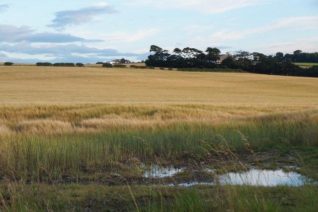 Fields at West Mains, near Wallyford