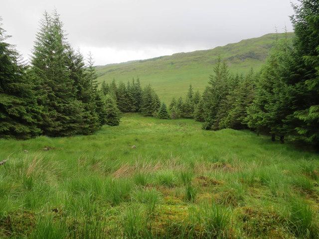 Conifer plantation near River Cononish