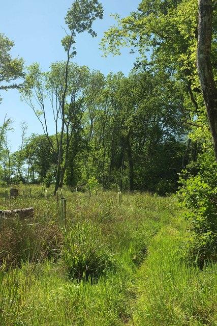 Path through Bower's Coppice