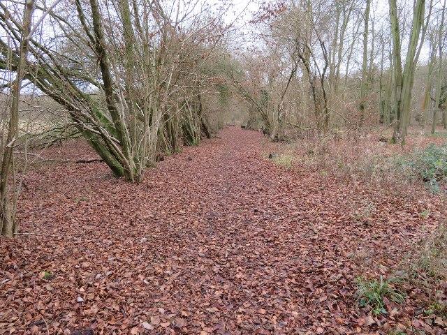 Path near Forest Retreat office