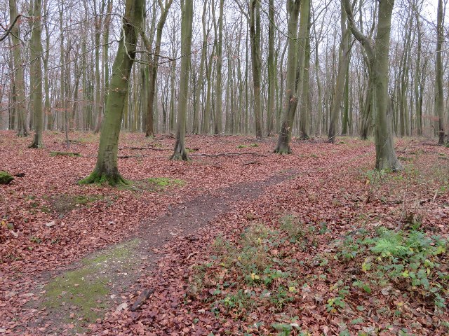 Path in Blackwood Forest