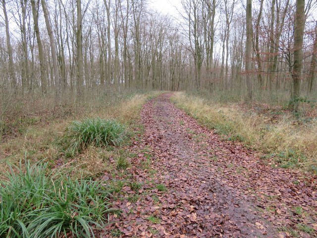 Track in Blackwood Forest