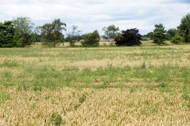 Fields near Wallyford