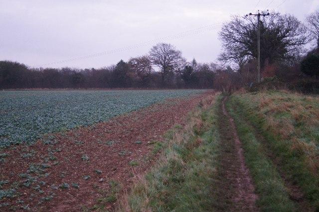 Footpath/bridleway towards Pardown