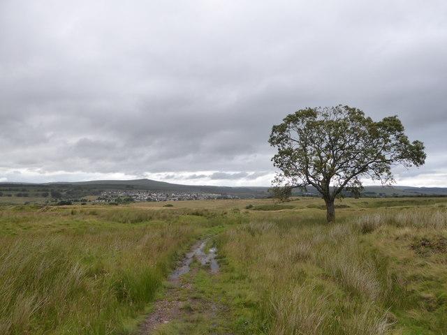 Lone tree on rough grazing