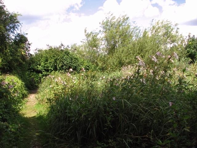 Footpath to Bramerton Common