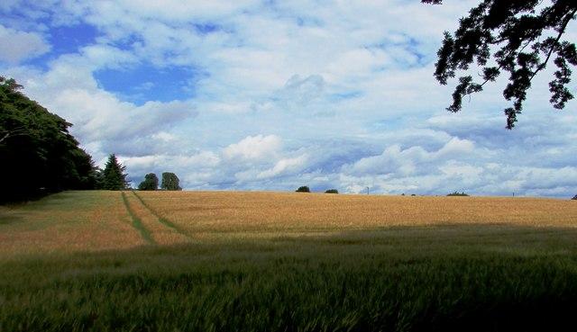 Wheatfield, Leven