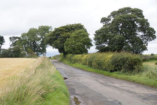 Trees around Mount Cottage, Gallow Hill, Gorebridge