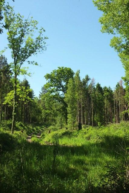 Haselbury Park Wood