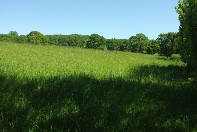 Meadow by Chedington Woods