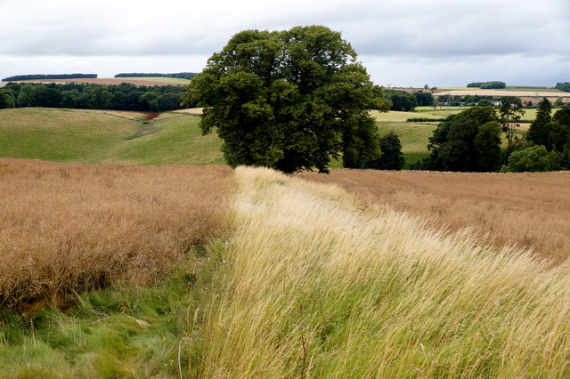 Fields south of Pathhead