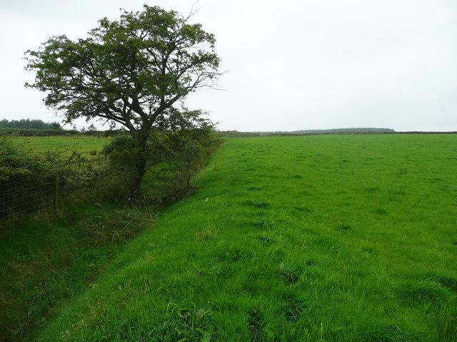 Footpath from Longtons Lane to Heath Farm, Gisburn Forest