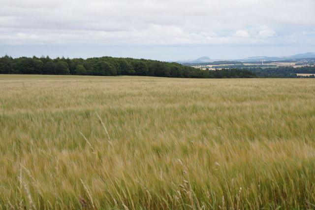 Fields east of Mayfield
