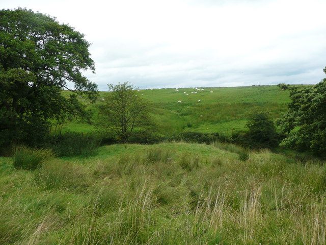 View across Long Gill Brook, Wigglesworth