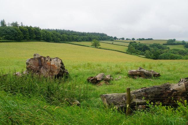 Logs near Birches Corner