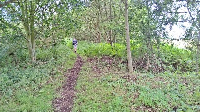 Path by Broadbent Gate Moors