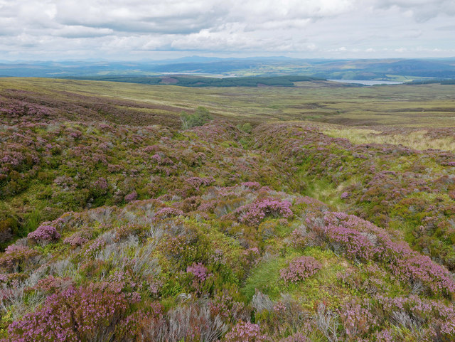 Heather of Garbh Choire