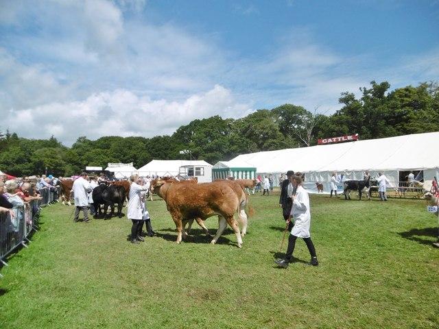Brockenhurst, show cattle