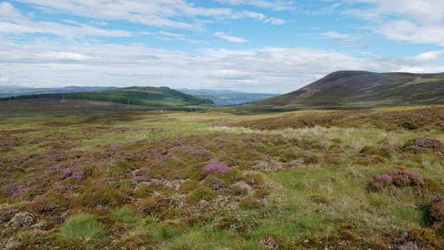 Heather and grass above Corriefearn