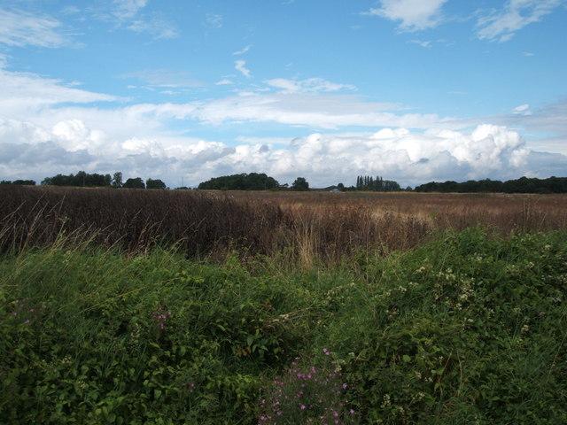 Crop field, Patience Bridge