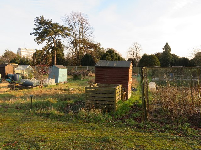 Burgess Road allotments