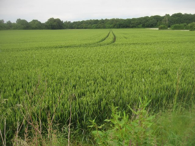 Distant view of Well's Copse
