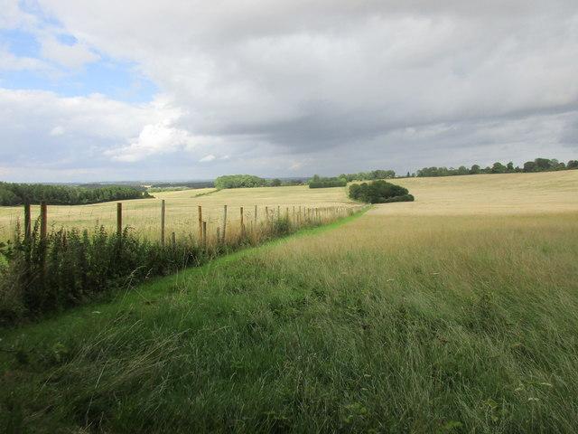 Downland near Kilmeston
