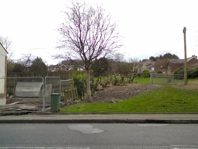 Tree clearance by the Village Green