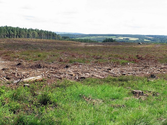 Felled area, Dipton Wood