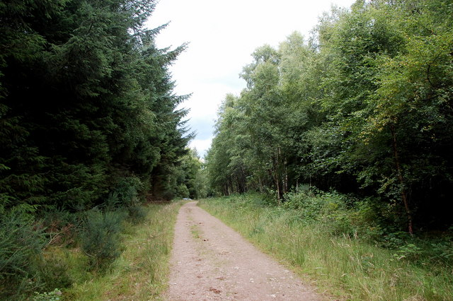 Forest track...