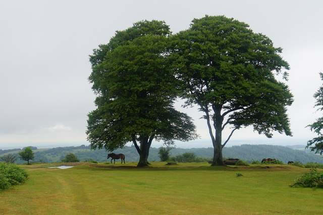 Pony on Cothelstone Hill