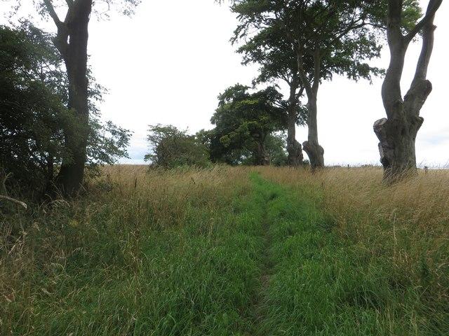 Bridleway between arable fields