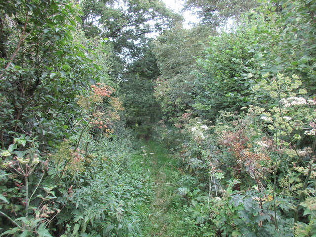 Footpath to Beauworth