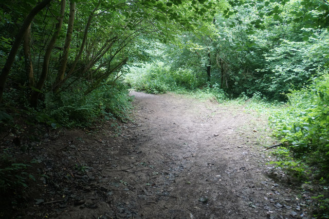 Path in Badger Copse