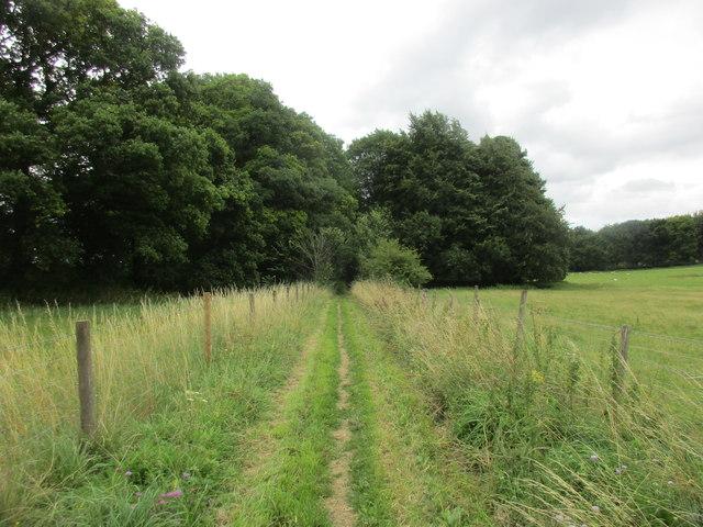 The Itchen Way at Hinton Ampner