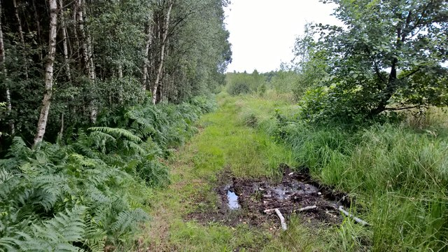 Path beside birch woodland on Thorne Waste or Moors