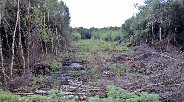 Fire break in birch woodland from path on Thorne Waste or Moors