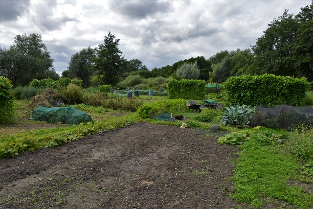 Loddon: Allotments in Bridge Street
