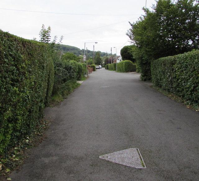 Hedge-lined Poplars Road, Mardy