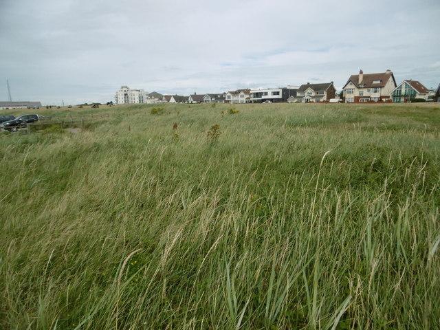 Crosby, grassland