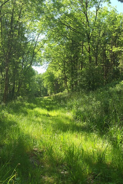 Track, Chedington Woods