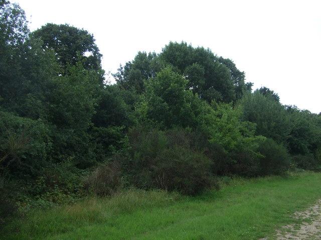 Woodland near Hollow Pond