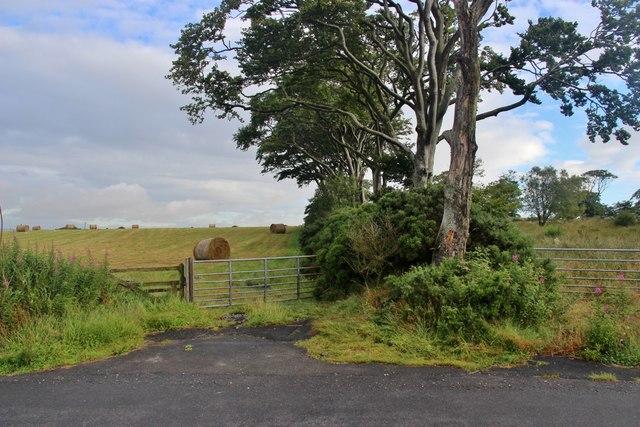 Old hedge boundary at Drumligair