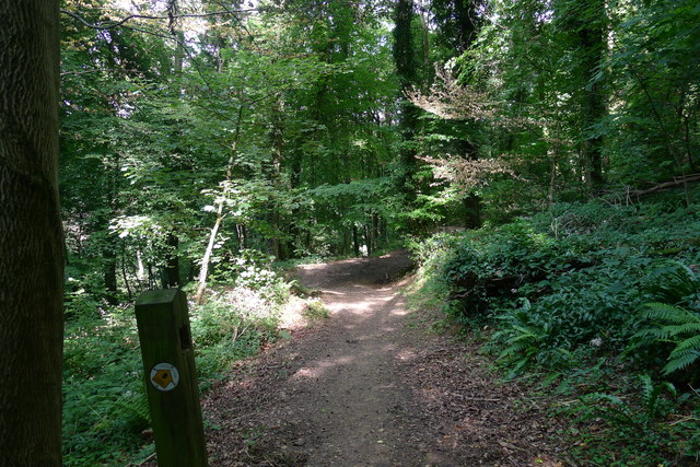The Cotswold Way through Coaley Wood