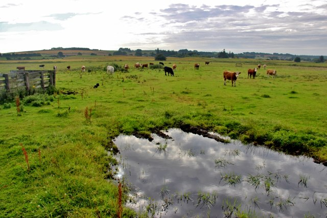 Cattle pasture at Swailend