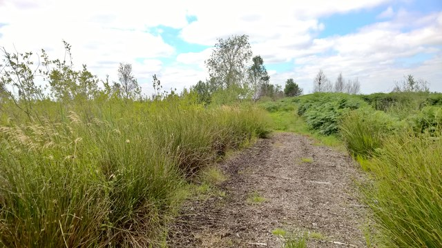 Path across Thorne Waste or Moors