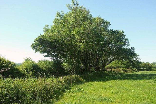 Path through field boundary near Wood Dairy Farm