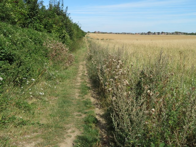 Footpath alongside Giddings Field (106 acres)