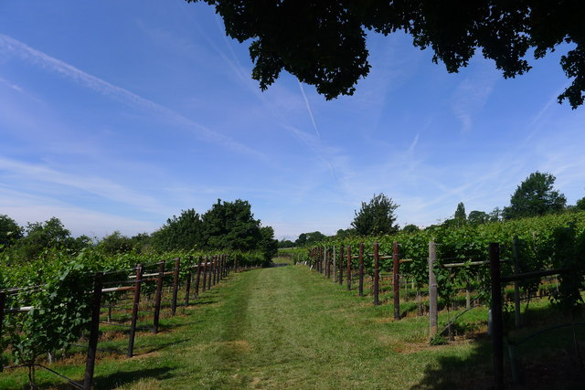 Vineyard at the foot of Doverow Hill